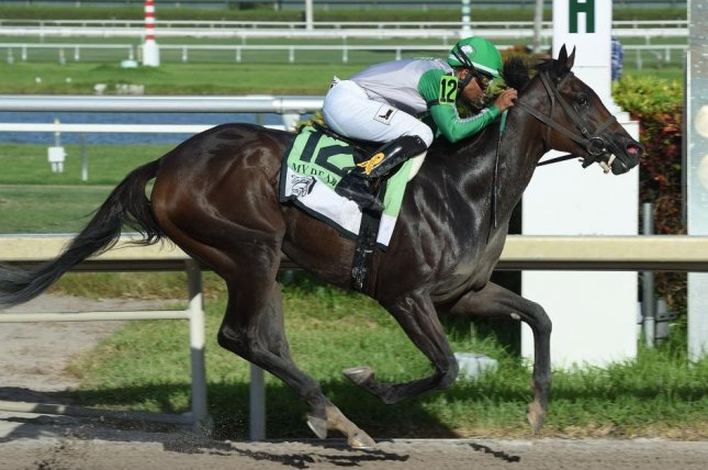 Cookie Dough, shown winning the My Dear Girl Division of the Florida Stallion Stakes, is among the favorites for Saturday's Grade III Royal Delta at Gulfstream Park. Photo by Leslie Martin, courtesy of Gulfstream Park