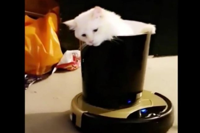 A cat prepares to give a high five while riding in a wastebasket atop a robotic vacuum. Screenshot: Storyful