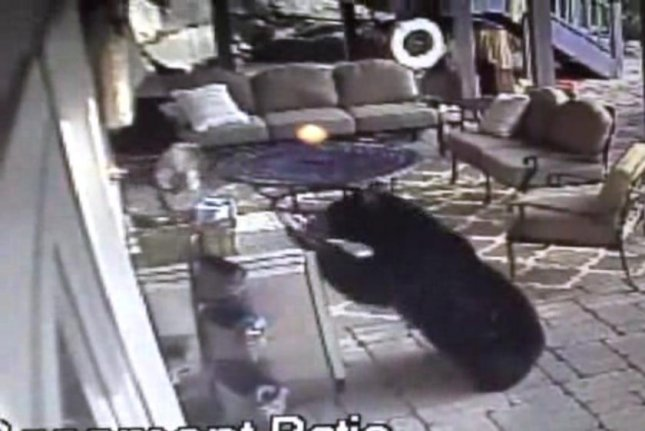 Jonathan Markley of Kinnelon shared video of this mother bear breaking into his patio fridge and stealing two cold beverages. WPIX-TV screenshot