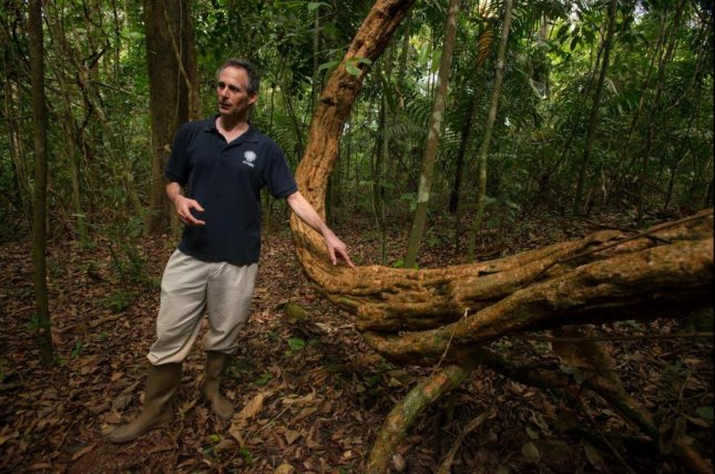 Researcher Stefan Schnitzer stands next to lianas, or woody vines, on Panama's Barro Colorado Island. Photo by the Smithsonian Tropical Research Institute
