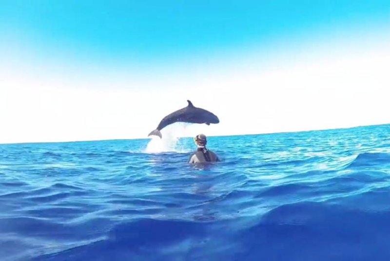 A snorkler has an unexpectedly close encounter with a false killer whale in Tonga. Screenshot: Scott Portelli/Facebook