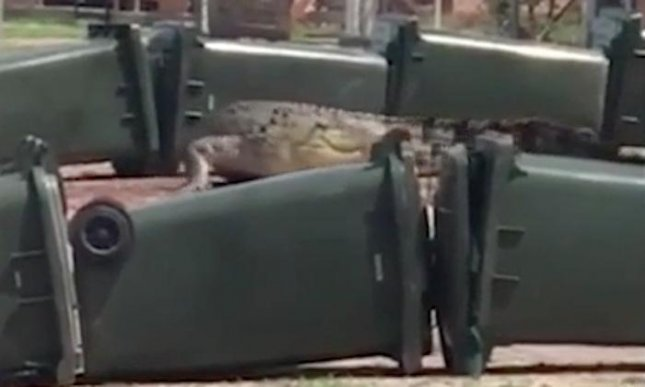 An 11-foot long crocodile was contained inside a barrier made of garbage bins and hay after wandering onto an Australian residence. Residents initially tried to guide the crocodile back to the water, but police determined it was best to contain the reptile until wildlife experts arrived to relocate it.  Screen capture/Storyful/AOL