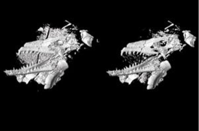 Scanned and printed fossil. Credit: Sergio Azevedo/National Museum of Brazil