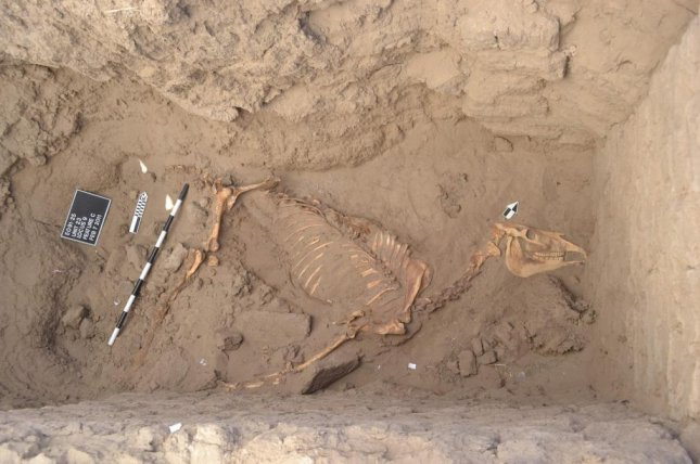 Archaeologists believe an ancient horse burial was a symbolic signature of the ascendant Kushite Dynasty. Photo by Purdue University