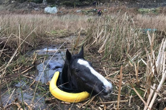 An RSPCA rescue crew was summoned toAnglesey, Wales, to rescue a horse named Farrah that wandered into a bog and sank up to her neck in the mud. Photo courtesy of the RSPCSA