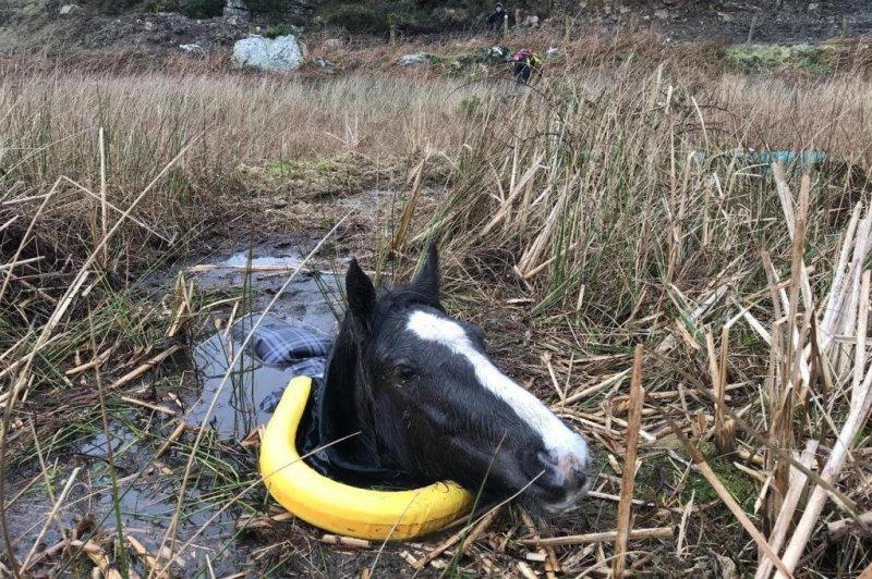 Cavallo salvato dopo essere affondato fino alla testa nella palude gallese