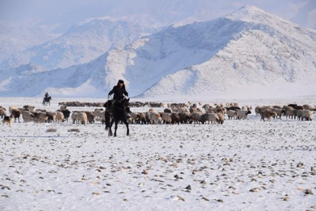 Interviews with modern herders in northwest China helped researchers better understand how ancient herders moved across the rugged landscape during the Bronze Age. Photo by Peter Jia