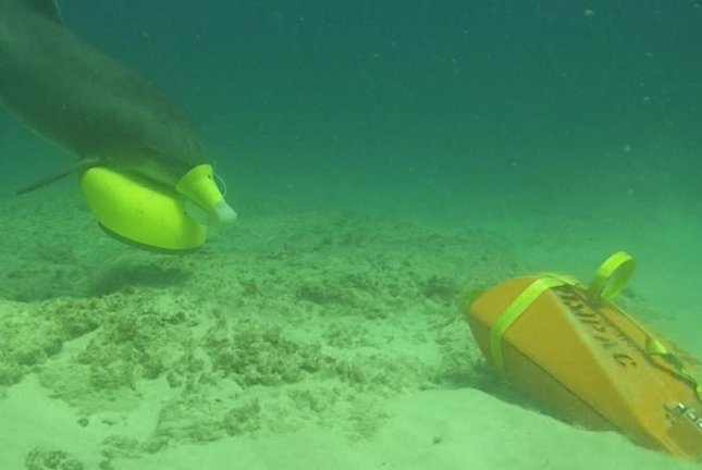 A U.S. Navy Marine Mammal Program MARK 7 Marine Mammal System bottlenose dolphin places a marking device in the vicinity of an exercise sea mine in Southern California during Rim of the Pacific exercise in 2018. Science Applications International Corp. has been awarded a $13.9 million contract to provide animal care, training and maintenance of marine mammals in the program. Photo courtesy of U.S. Navy