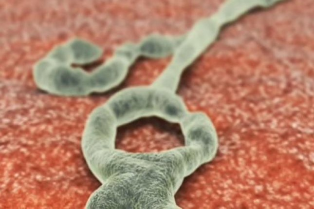 A team of scientists changed a protein in the Ebola virus called VP35, which allows the virus to block any early immune responses to infection. Photo courtesy of HealthDay News
