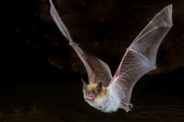 Most rabies infections in humans come from bats — CDC
