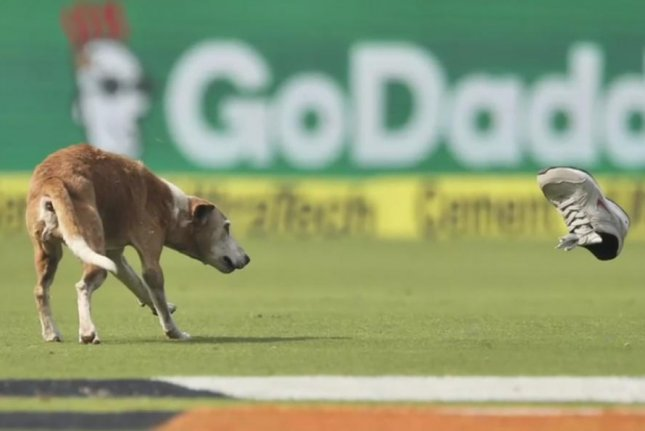 A dog dodges a shoe thrown by security staff at a cricket stadium in India after interrupting a match between England and India's national teams. Screenshot: BBC