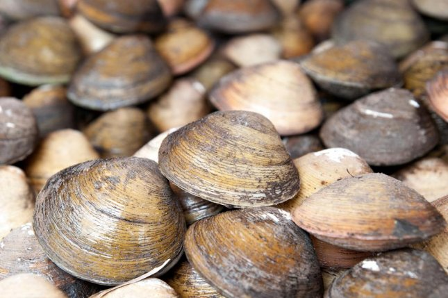 Clams and other bivalves living near the poles have longer lifespan than their peers positioned closer to the equator. Photo by Sylvia sooyoN/Shutterstock