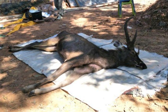 More than 15 pounds of garbage were discovered in the stomach of a deer found dead at a national park in Thailand. Photo courtesy of Kingdom of Thailand Office of Protected Area Region 13