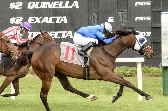 Micheline, seen winning the Grade II Hillsborough Stakes at Tampa Bay Downs, is among the favorites for Saturday's Robert G. Dick Memorial at Delaware Park. Photo courtesy of Tampa Bay Downs