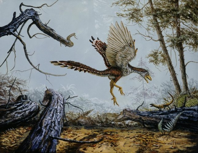 Archaeopteryx, believed to be a transitional species between theropod dinosaurs and birds, had longer forelimbs and shorter hind limbs than its ancestors. Credit: Michael Skrepnick