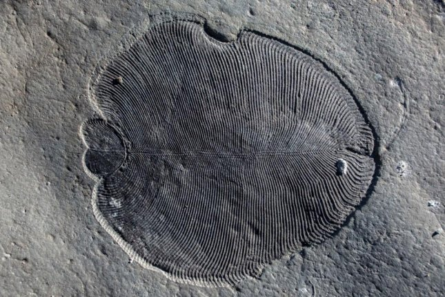 Scientists extracted a cholesterol molecule from a 558-million-year-old fossil found in northwest Russia. Photo by the Australian National University