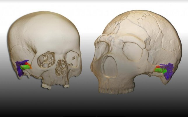 Neanderthals likely could have perceived and produced speech similar to modern humans, according to models of both species ear structures. Photo by Mercedes Conde-Valverde