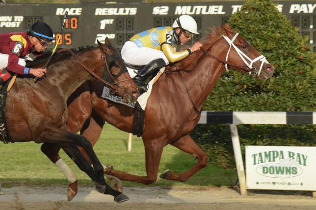 Flameaway edged into the Kentucky Derby picture with a victory in Saturday's Sam F. Davis Stakes at Tampa Bay Downs. Photo courtesy of Tampa Bay Downs