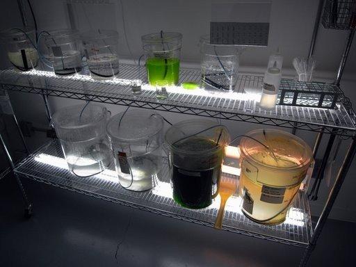 Breakthrough for algae, OriginOil says