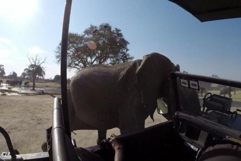 An elephant rams a safari truck in Hwange, South Africa. Kid_GoPro/Vimeo video screenshot