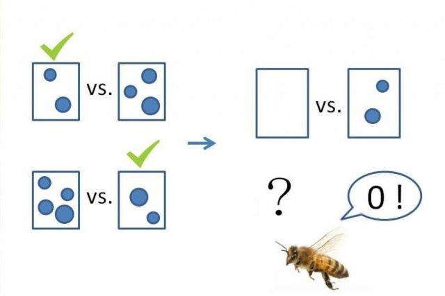 In tests involving cards and drinking solutions, bees proved they can understand simple mathematic concepts, including the concept of zero. Photo by Scarlett Howard/Aurore Avarguès-Weber/CNRS