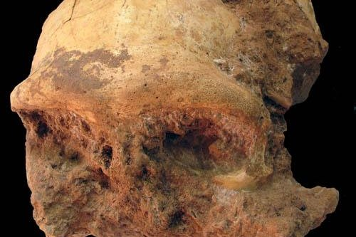 Scientists in China recently unearthed a very well preserved Homo erectus skull. Photo by IVPP/Chinese Academy of Sciences
