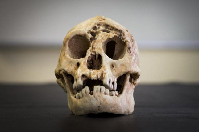 As part of their research, Australian archaeologists reconstructed skull of the Indonesian hobbit species Homo floresiensis. Photo by Stuart Hay/ANU