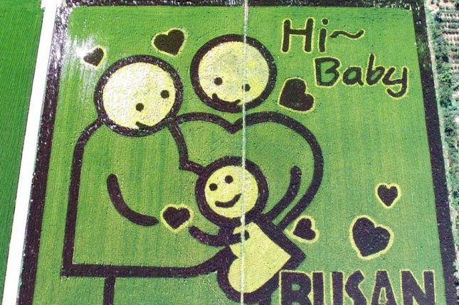 This picture drawn on a rice paddy in the southeastern port city of Busan on August 13, encourages childbirth. Photo by Yonhap