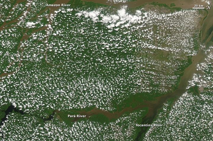 NASA study: Vegetation decline seen in wake of drying Amazon