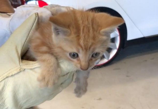 A Tesla service center technician pulled a tiny orange kitten out of the rear bumper of a man's Model X car.  Screen capture/S R/YouTube