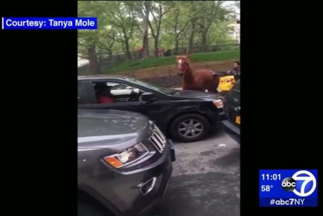 Carriage horse breaks free, runs through rush hour traffic