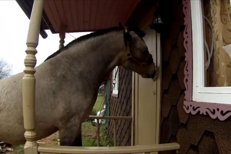Rita the horse opens the door. Screenshot: Storyful