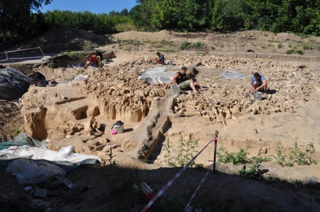The majority of bones found at the Kostenski 11 site in the Russian Plains were from mammoths, including 51 lower jaws and 64 individual mammoth skulls. Photo by Alex Pryor/University of Exeter