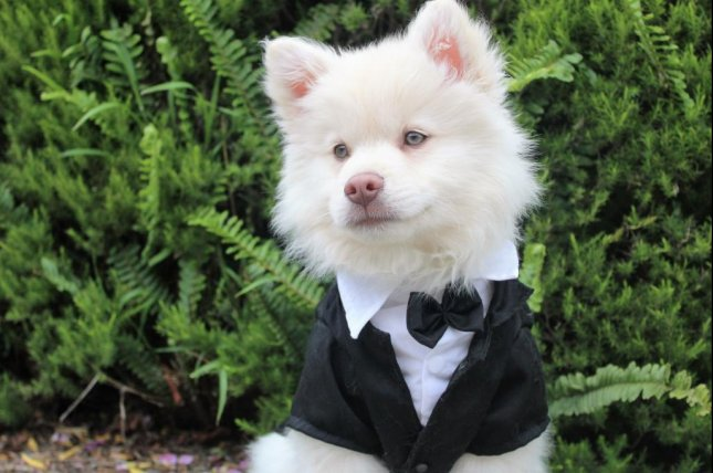 An Arkansas woman who formerly worked as an administrative assistant to a county judge pleaded guilty to fraud charges stemming from allegations she used a country credit card for nearly $200,000 worth of personal purchases, including a tuxedo for her dog. Photo by Spiritze/Pixabay.com