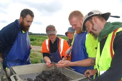 Researchers sift through the remains of a fish fermentation pit found at a 9,200-year-old settlement in Sweden. Photo by Lund University