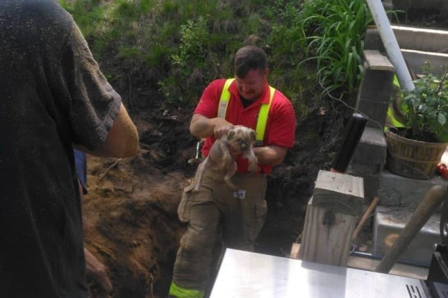 Firefighters rescue small dog from underground animal burrow