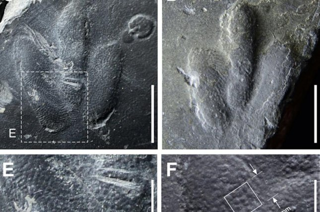 Scientists found the perfectly preserved skin traces inside footprints left by a tiny theropod. Photo by Kyung Soo Kim, et al./Scientific Reports