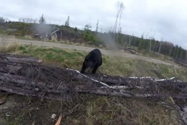 Canadian hunter shockingly staves off black bear attack with punch