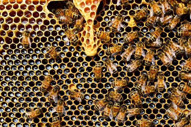 Bees living on organic farms are healthier, produce more offspring and make more honey. Photo by CNRS/Public domain