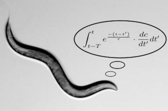 Scientists described the mathematics behind the roundworm's search for food. Photo by Alon Zaslaver/Hebrew University