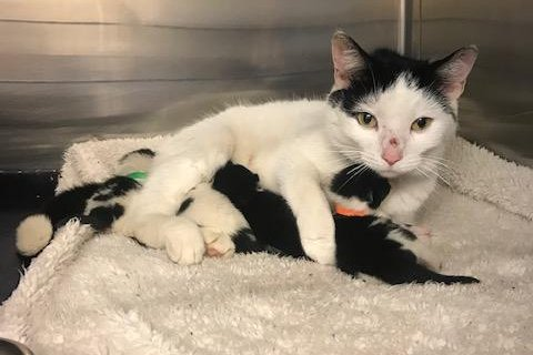 A mother cat and her four newborn kittens were rescued from under a newly installed escalator at an under-construction London Underground station. Photo courtesy of the RSPCA