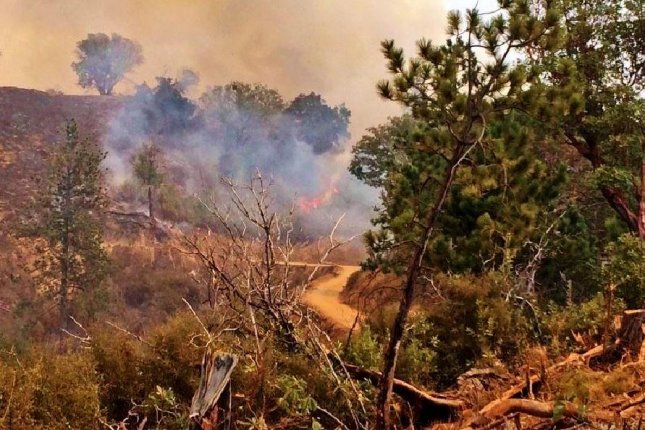 The Soberanes Fire burns in Monterey County, Calif., on Thursday, where it has destroyed more than 80,000 acres and 57 homes since it started July 22 -- and resulted in the seizures of nearly 20,000 illegal marijuana plants that had been cultivated inside the Los Padres National Forest. Photo courtesy Cal Fire