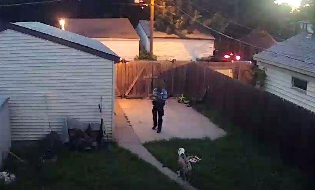 Video shows Minneapolis officer shooting dogs, police say they're investigating