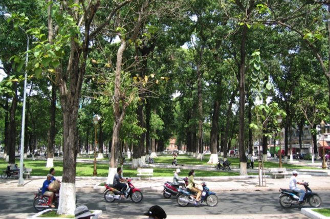 Scientists studied heartwood samples from trees in cities around the globe, including trees growing in Hanoi, Vietnam. Photo by TUM