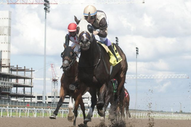 Mighty Heart, Canada's reigning Horse of the Year, wins Thursday's Grade III Dominion Day Stakes at Woodbine. Photo by Michael Burns, courtesy of Woodbine