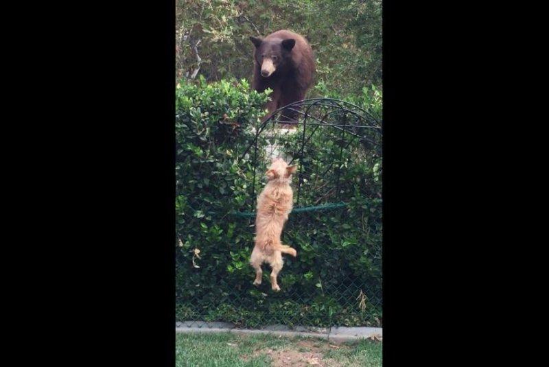 「Christine Downs bears」的圖片搜尋結果
