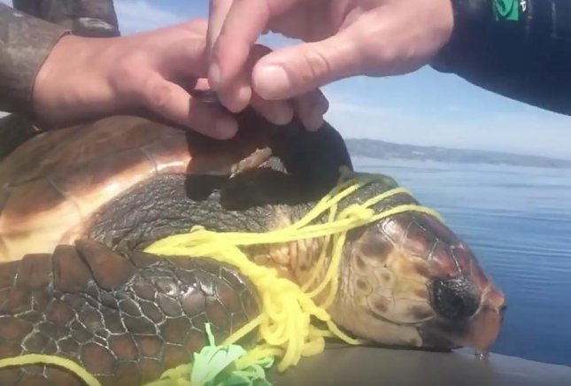 Videographers Angel Hernandez and Bryce Trevett rescued a loggerhead sea turtle that was trapped in a balloon string in the ocean off the coast of California. 