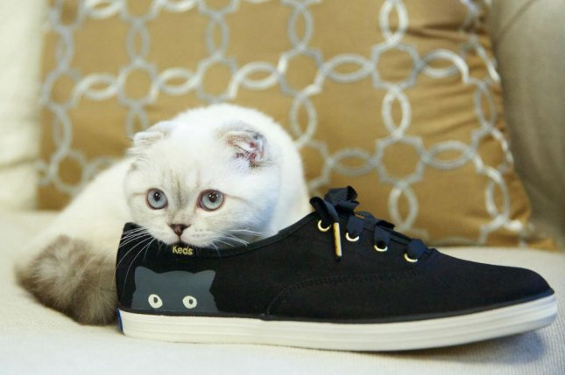 Taylor Swifts Cat Olivia Benson Models For Keds Campaign Upicom