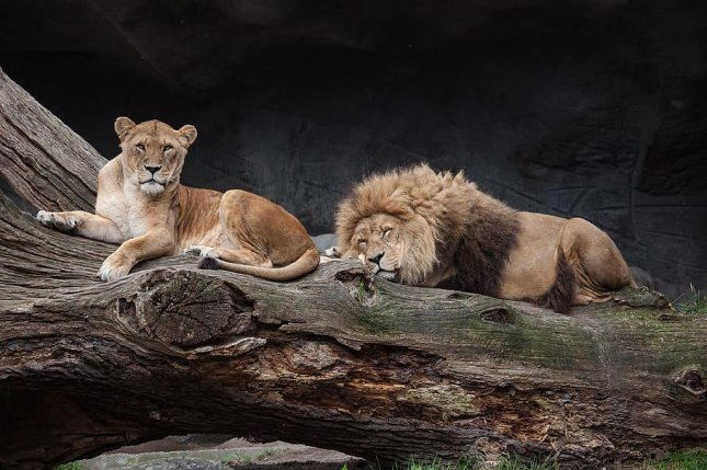Male mammals tend to lead shorter lives than their female counterparts, at least in part due to their Y chromosome. Photo by Piqsels/CC