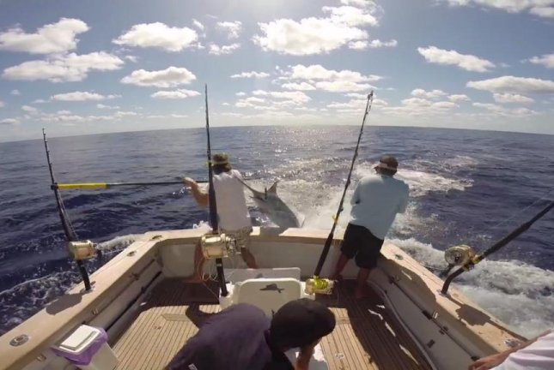 A blue marlin nearly impales a deckhand on an Australian charter boat. Screenshot: Mufasa Sportfishing/Facebook
